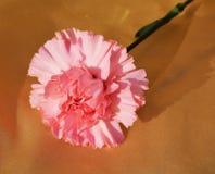 康乃馨,纤巧,特写镜头的标志 免版税库存照片