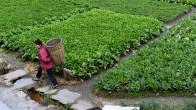 康定,中国:2013年10月1日:农夫在领域工作 免版税库存照片