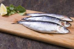 康沃尔沙丁鱼 免版税库存图片
