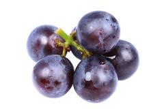 康科德紫葡萄 库存照片