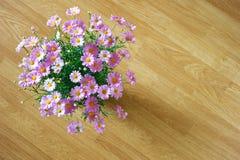 延命菊在粉色的雏菊花 库存图片