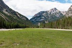 延长的绿色草甸和针叶树在阿尔卑斯山风景在夏时 免版税库存图片