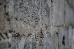 建立凝结面以灰色不规则性 水泥织地不很细背景 免版税库存图片