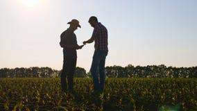 建设性的讨论农田伙伴 影视素材