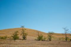 离开与黄色干燥炎热的草和稀稀落落的树的小山 免版税库存照片
