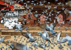 离开在加德满都Durbar广场的鸽子 免版税库存照片