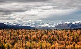 开始在阿拉斯加的秋天 免版税图库摄影