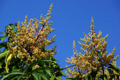 开始树的特写镜头开花与芽 库存图片