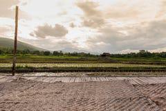 开始生长在雨季的领域 库存照片