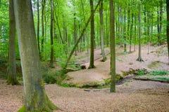 开始秋天森林 免版税图库摄影