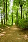 开始秋天森林 免版税库存照片