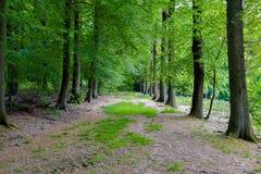 开始秋天森林 图库摄影