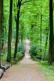 开始秋天森林 库存图片