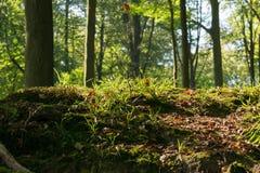 开始秋天森林 库存照片
