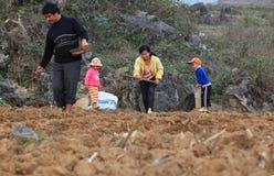 开始越南少数的家庭玉米的一个新的季节在领域的 库存照片