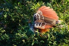 开始飞行的鸟在密林 库存图片