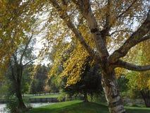 开始3的秋天 免版税库存照片