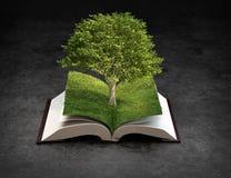 开张知识书 向量例证