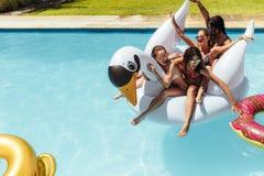 开心的朋友在水池的一只可膨胀的天鹅 库存图片