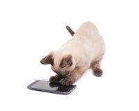 开掘在一个巧妙的电话的暹罗小猫 免版税库存照片