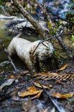 开掘在水中的狗 免版税图库摄影