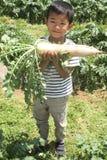 开掘日本萝卜的日本男孩 图库摄影