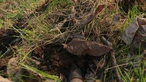 开掘的土壤POV英尺长度 股票录像