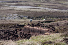开掘的泥煤 库存图片