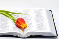 开放圣经的花 免版税库存照片