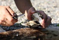 开放新鲜的牡蛎对负 免版税库存照片