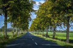 开放有树的路 免版税图库摄影