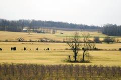 开放的农田 库存照片