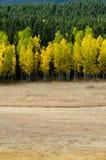 开放领域导致改变的白杨木 dng 免版税库存照片