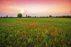 开放领域风景在晚上时间的 图库摄影