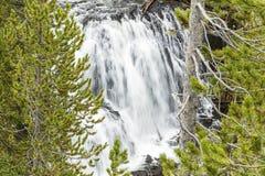 开普勒落下瀑布黄石树 库存图片