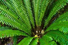 开普勒轨道的蕨森林 免版税库存图片