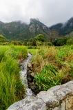 """开普敦â€的""""南非Kirstenbosch植物园 图库摄影"""