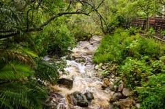 """开普敦â€的""""南非Kirstenbosch植物园 库存图片"""