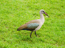 """开普敦â€的""""南非Kirstenbosch植物园 免版税库存照片"""