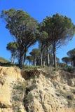 开普敦桌山的森林  免版税库存图片