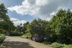开普敦植物园 库存照片