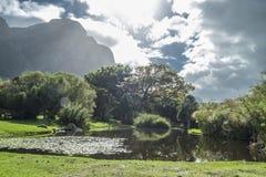 开普敦植物园 免版税图库摄影