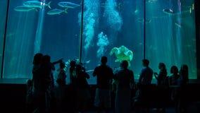 开普敦水族馆 免版税图库摄影