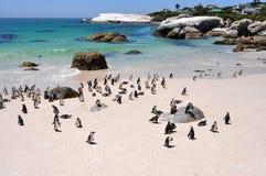 开普敦- pinguin - Bolders海滩 免版税库存照片