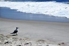开普梅海滩 免版税图库摄影