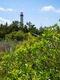 开普梅灯塔,新泽西,森林视图 免版税库存照片