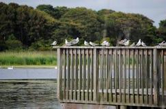 开普梅鸟类保护区 免版税库存图片