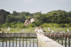 开普梅鸟类保护区 库存照片