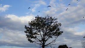 离开树的乌鸦 股票视频