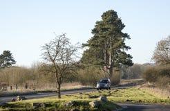 开汽车沿一条乡下公路在南英国 图库摄影
